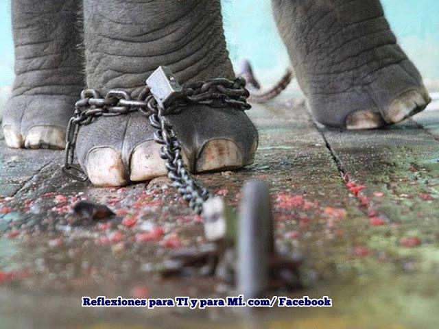 Elefante Encadenado Reflexion